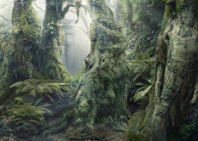 Rainforest Optical Illusion